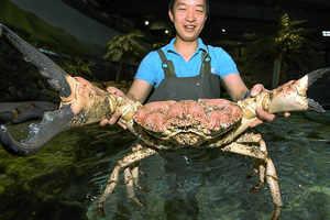 Big-crab.thumb